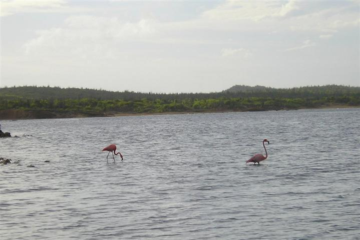 Satellite earth station removal Mark Erney pictures and images Caribbean Nederlands Dutch Antilles island Bonaire flamingo flamingos Pic 8